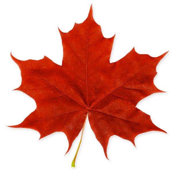 image:maple leaf